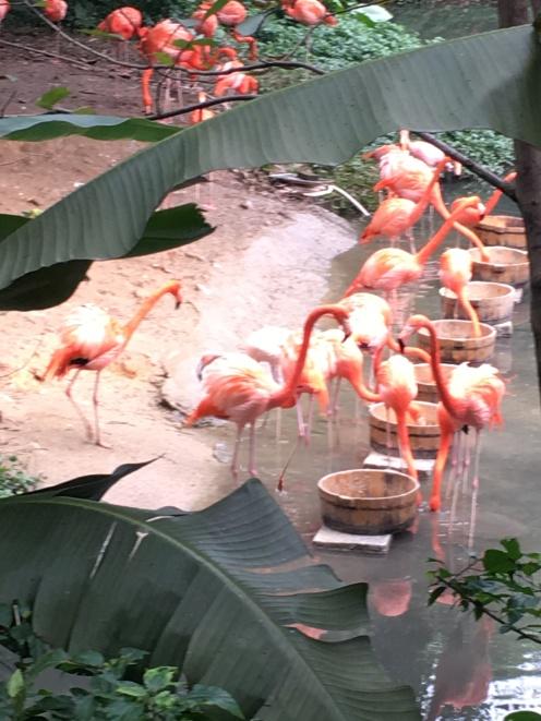 guangzhou zoo 1