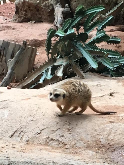 guangzhou zoo 2
