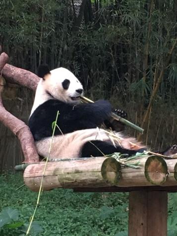 guangzhou zoo 4