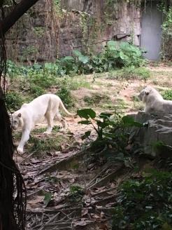 guangzhou zoo 5