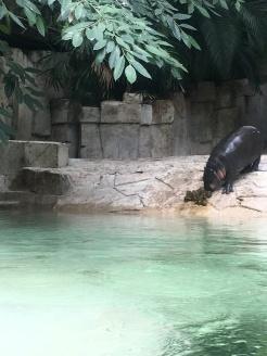 guangzhou zoo 7