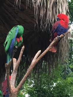 guangzhou zoo 8