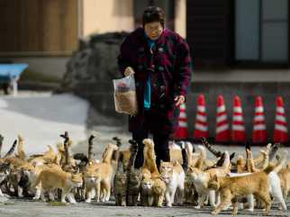 tourists-are-flocking-to-a-remote-japanese-island-thats-overrun-by-feral-cats