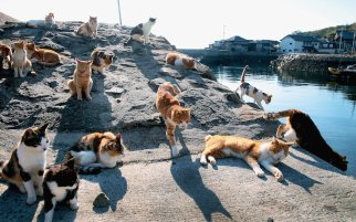 What-Cat-Island